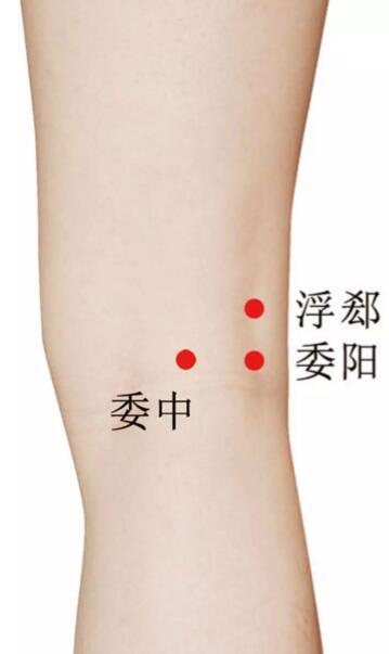 膝关节炎怎么贴小黑膏,膝关节炎的对应穴位 第7张