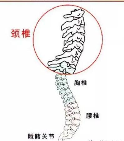 颈椎病是什么,有哪些危害呢?