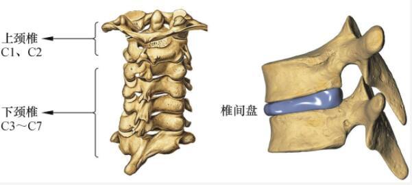 颈椎间盘在哪里